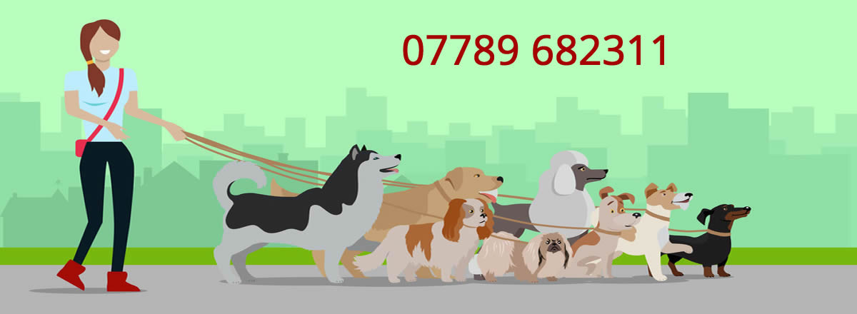 dog walker skelmersdale pet sitting doggy day care skelmersdale dog walking services